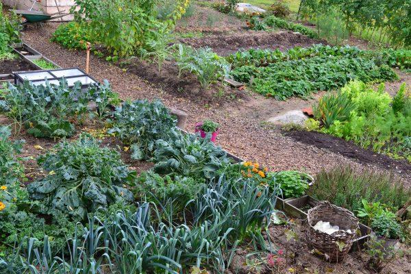 En översiktsbild på köksträdgården.