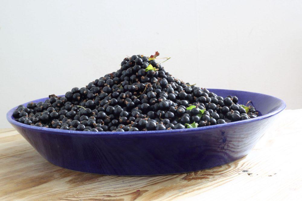 svartvinbärssylt