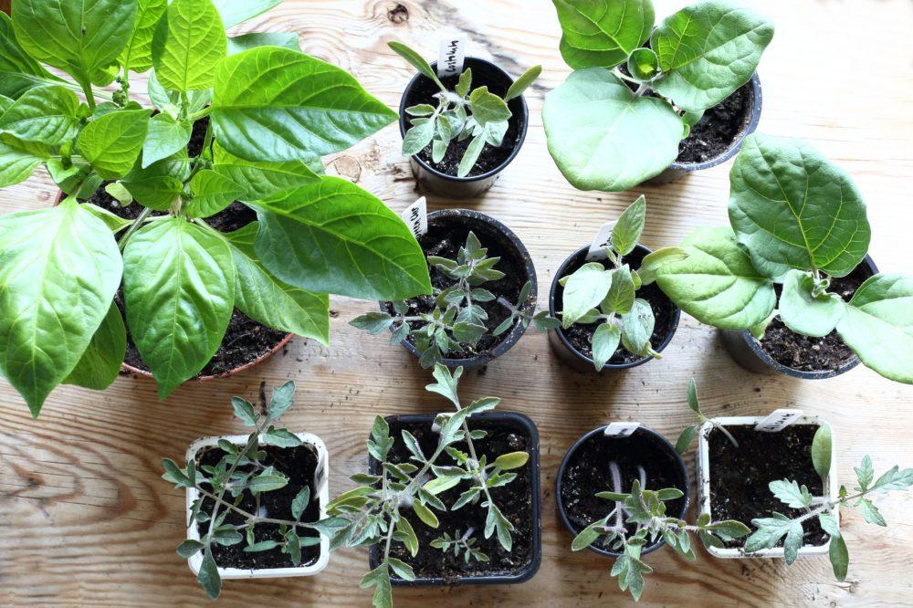 växtkraft mars17