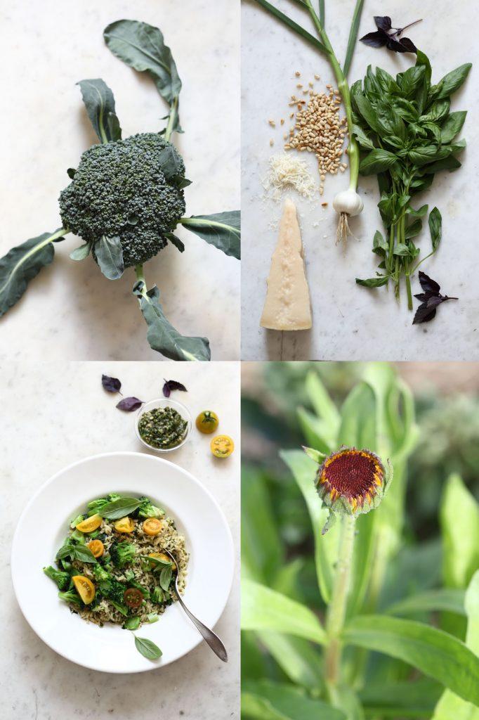 broccoli-knopp-juli17