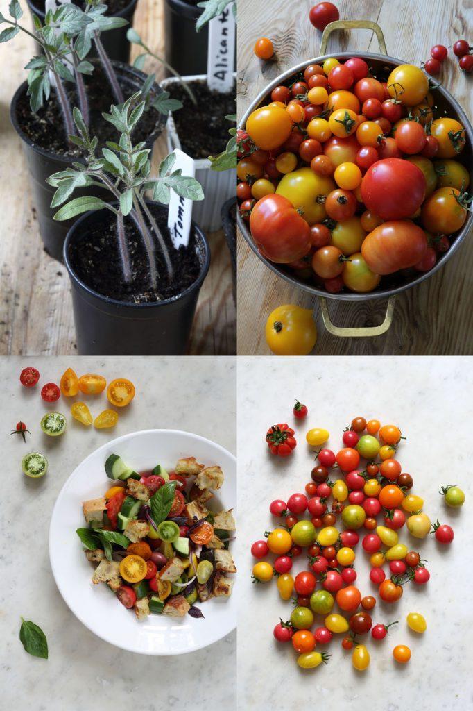 skogtillbord-tomatodling-feb18