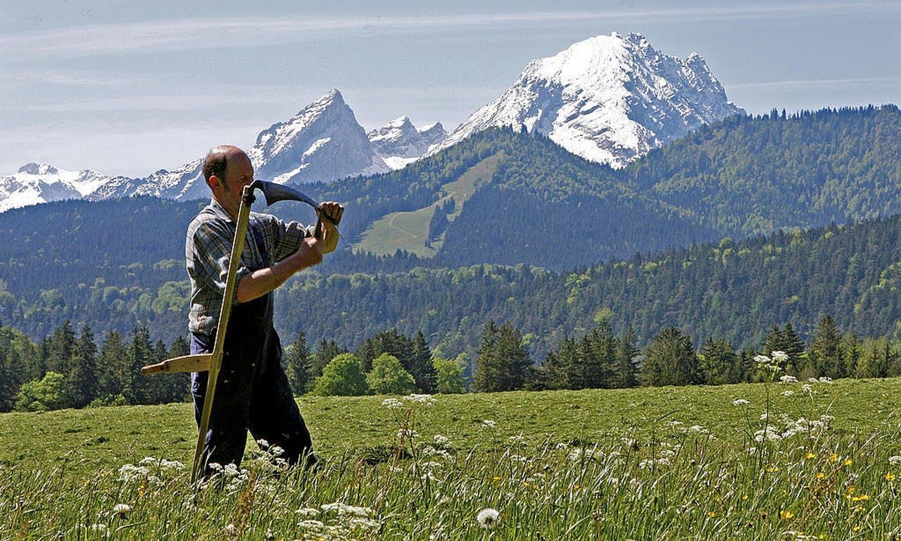 En tysk lantbrukare slipar sin lie. Arkivbild