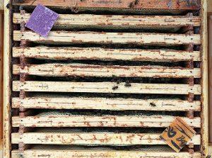 bina är invintrade