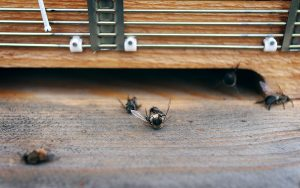 bina har städat ut drönarna